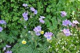Des floraisons précoces cette années... Th_fd737cc9