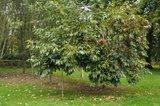 A qui appartiennent ces belles couleurs d'automne? Th_DSC_0084