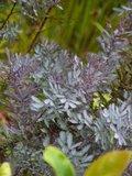 Jardins en Bretagne Th_508bc038