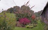 A qui appartiennent ces belles couleurs d'automne? Th_Lejardindelo-16