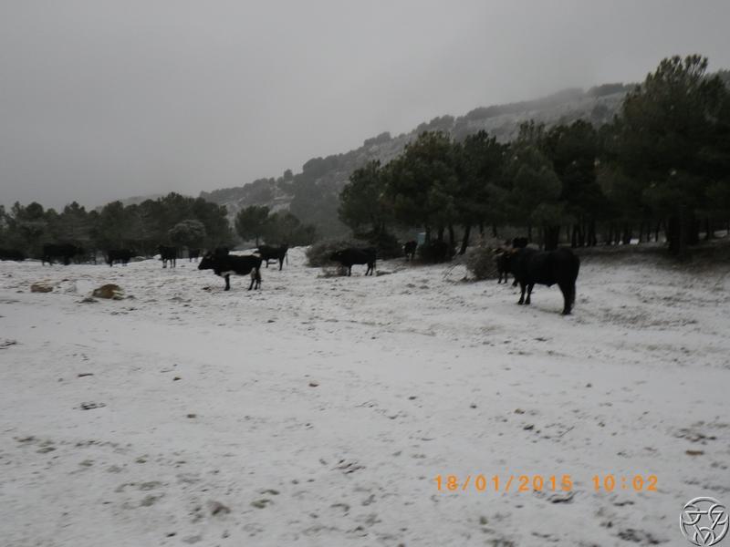 18/01/2015 - Propuesta de rutas: Arganda del rey vs Mataelpino RIMG0195_zps5f468990