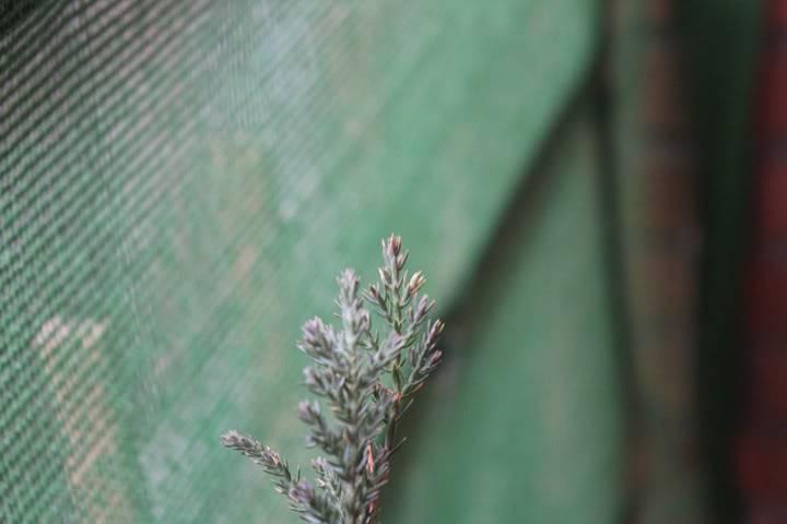 Mis primero Pre-Bonsai o Plantones mas bien IMG_0212