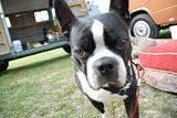 Bug-a-Palüza 12 April 16-18, 2010 - Page 6 Th_DSC_0117