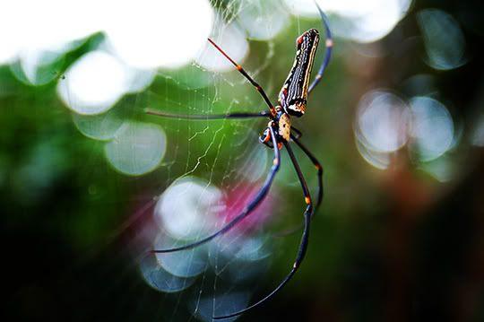 4th October 2008:  Pulau Ubin Outing Spider