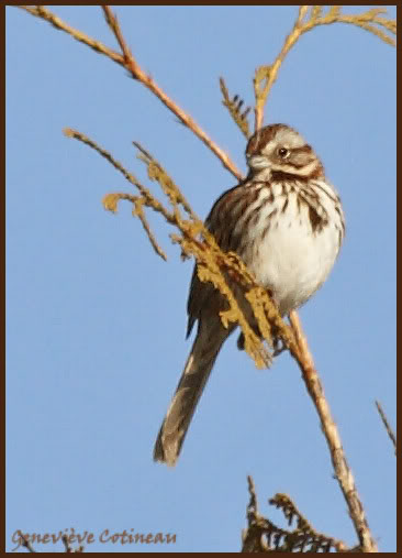 Ma saison de photo d'oiseaux est ouverte! IMG_0305