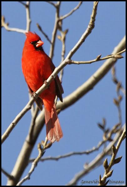 Ma saison de photo d'oiseaux est ouverte! IMG_0308