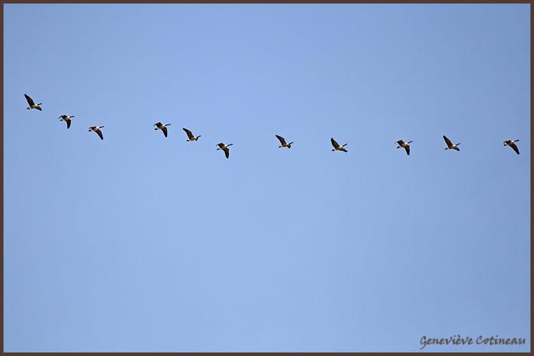 Ma saison de photo d'oiseaux est ouverte! IMG_0342