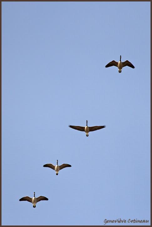 Ma saison de photo d'oiseaux est ouverte! IMG_0344