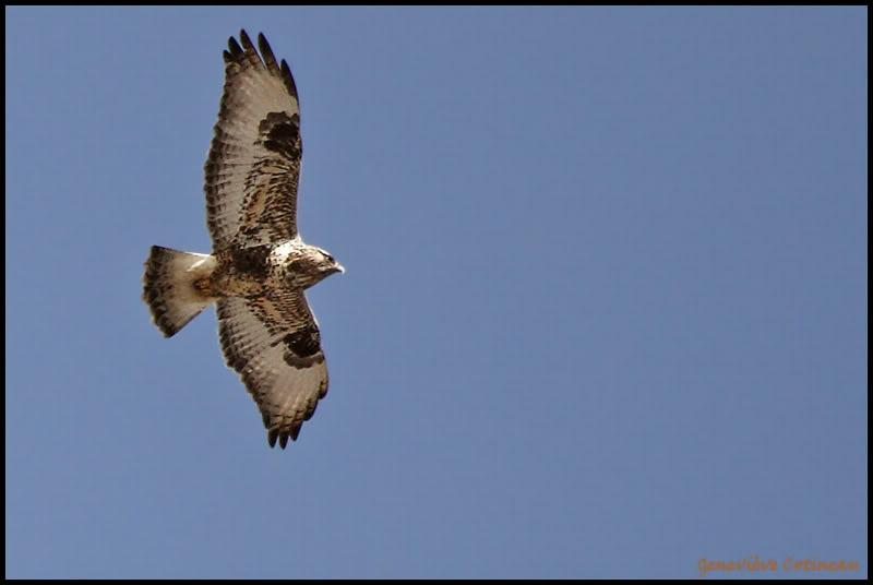 Ma saison de photo d'oiseaux est ouverte! IMG_0346