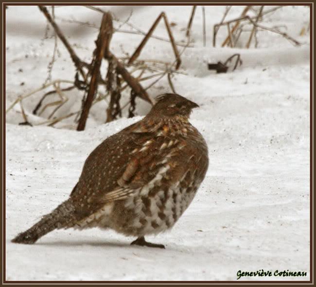 Ma saison de photo d'oiseaux est ouverte! IMG_0368