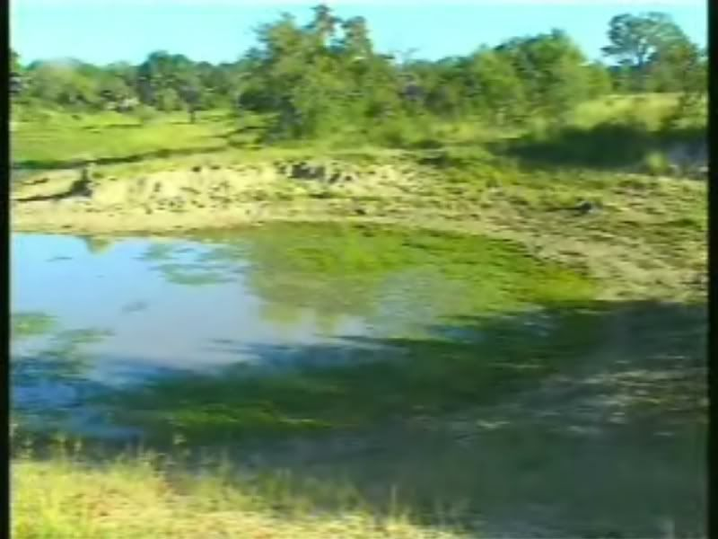 Lion Pride RP Wateringhole1