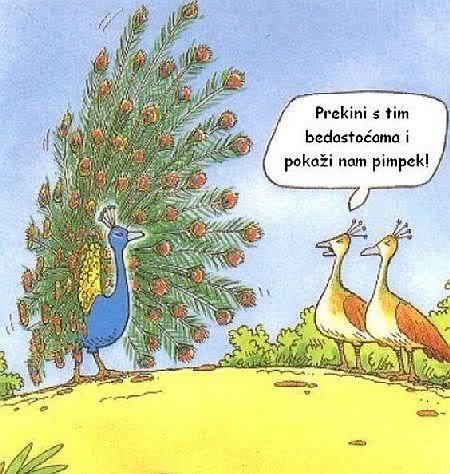 Karikature Paunvic