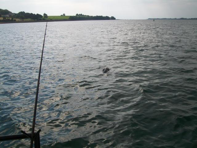 Boat match no 5. Menai Straits. 5/9/10. 100_0696