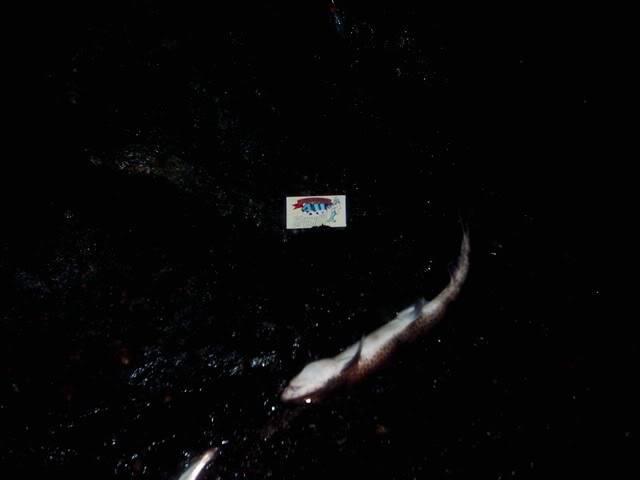 Kevs species hunt 2009. Amlwch015