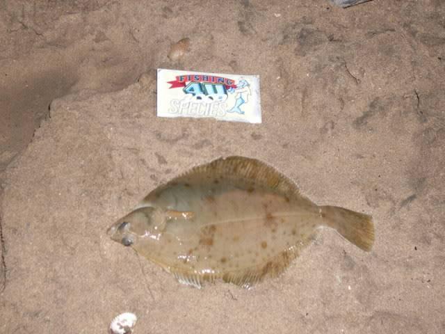 Kevs species hunt 2009. Prestatyn010