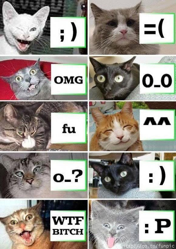Imagenes Graciosas XD - Página 3 Gatossmileys