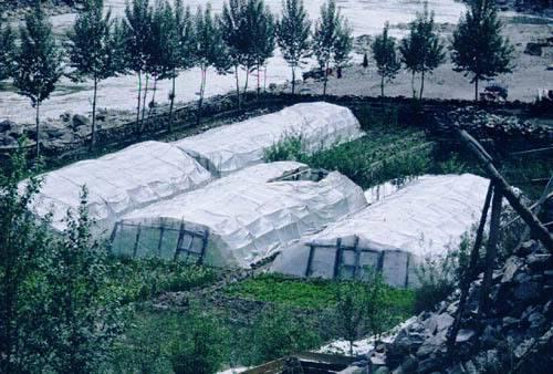 Basic Greenhouse Ganbus_greenhouses