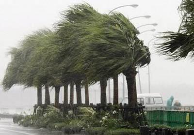 .....Gió...ơi...gió.... Images1363719_bao