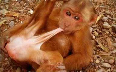 Think they got it wrong... MonkeySex-2