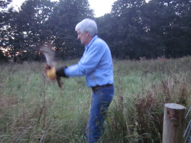 Tawny Owl Rescue Owl004