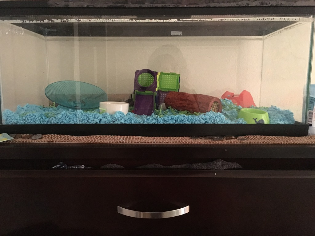 My mouse tank setup. First time owner IMG_4850_zpsldgkf9kv