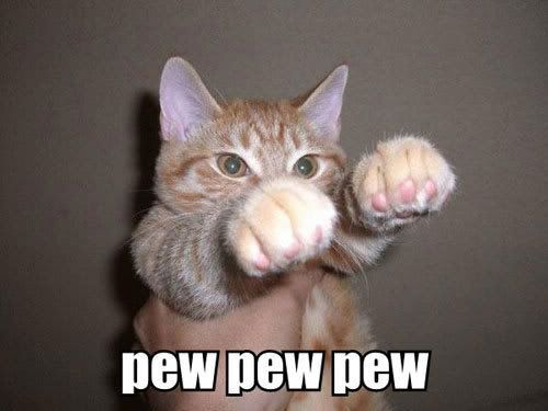 Photo Gallery of Absolute Randomness - Page 6 Funny-Cat-Pictures-animal-humor-935491_500_375