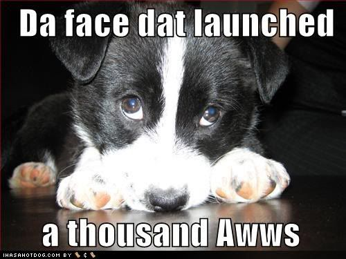 Photo Gallery of Absolute Randomness - Page 6 Cute-puppy-pictures-thousand-aww-face