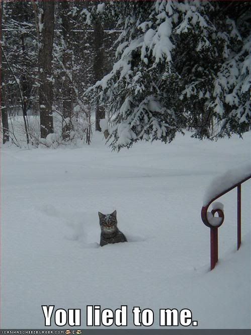 Photo Gallery of Absolute Randomness - Page 6 Funny-pictures-angry-cat-snow