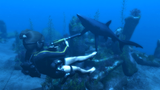 Tomb Raider: Underworld (2008) FAQs & Info Th_TRUScreenshot001