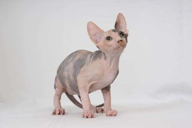 1 er Thème : Quand votre/vos chats étaient chatons DSC08564