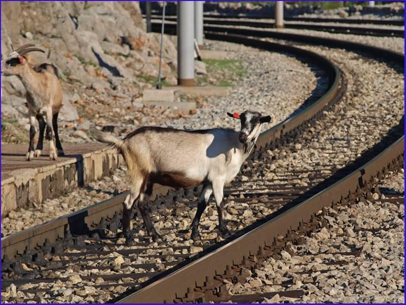 Željeznica i beštije P9200863res