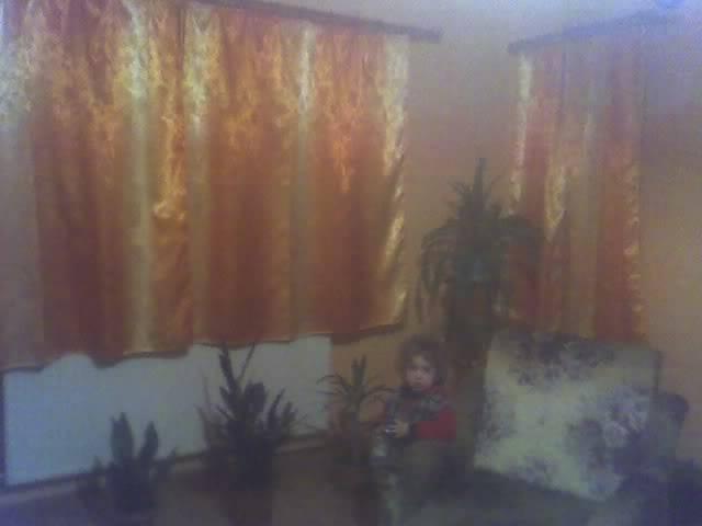 poze cu plantele mele de ghiveci ! - Pagina 3 29-11-08_2022