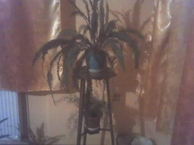 poze cu plantele mele de ghiveci ! - Pagina 3 29-11-08_2025