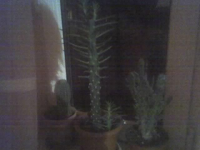 poze cu plantele mele de ghiveci ! - Pagina 3 29-11-08_2026