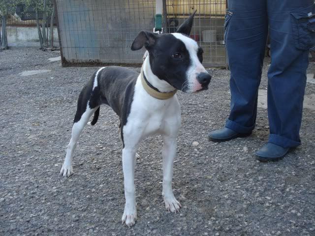 michele, cachorra lindissima na Uz DSC05643