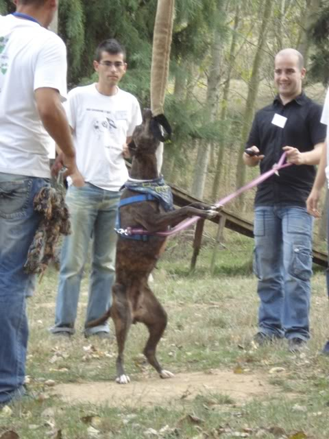 raissa,pit bull tigrada CopyofDSC01800