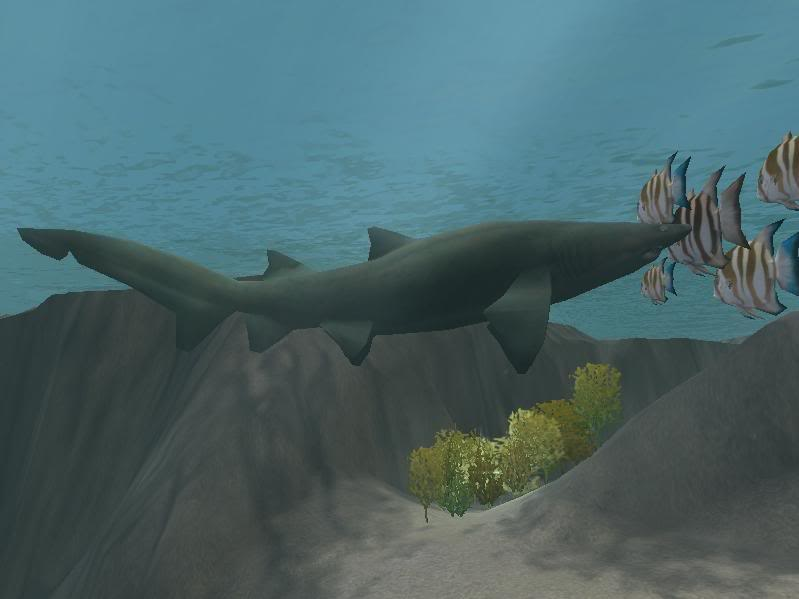 Topics tagged under shark on User - Made Creations Sandtiger1hh1