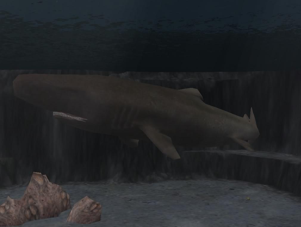 Topics tagged under shark on User - Made Creations Sleeper1