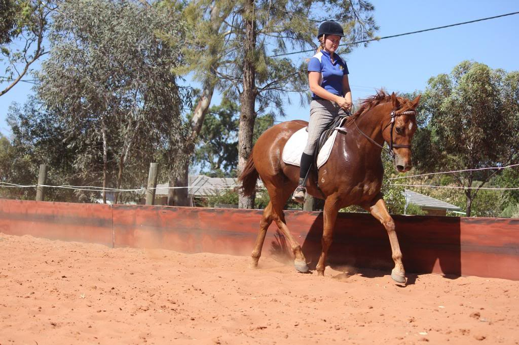 6 Year old thoroughbred gelding IMG_9737_zps55688470