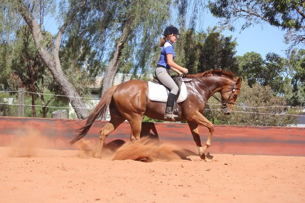 6 Year old thoroughbred gelding IMG_9816_zps8aaa512e