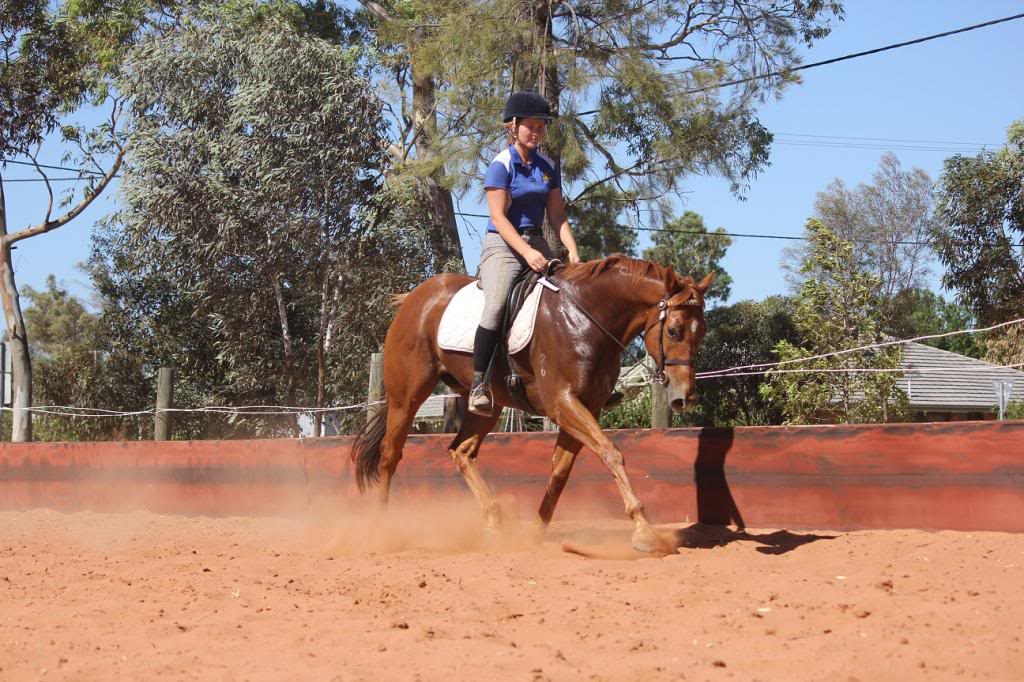 6 Year old thoroughbred gelding IMG_9835_zps81a82071