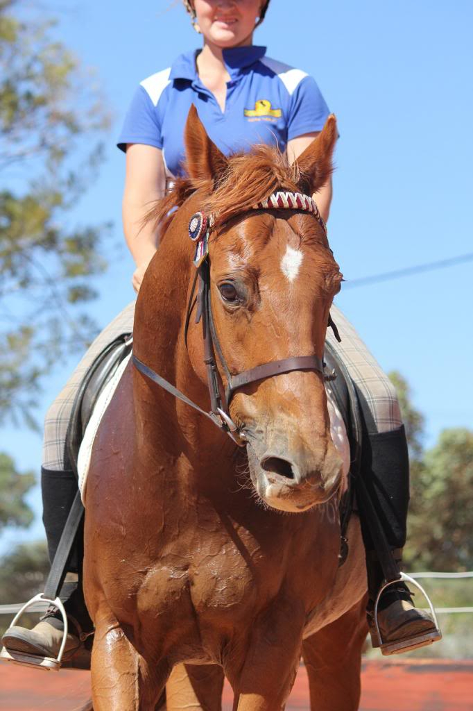 6 Year old thoroughbred gelding IMG_9841_zpsfd5999e0