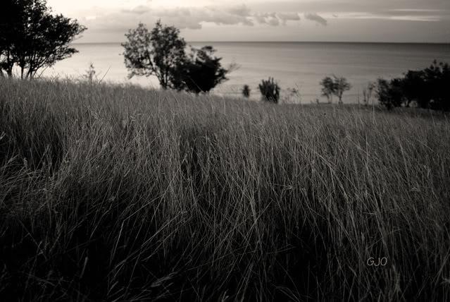 Lo lindo de Puerto Rico en Blanco y Negro... DSC_0073copy