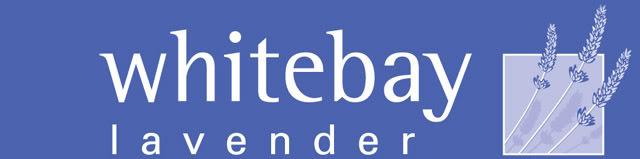 [E] E-TRADERZ PROMOTIONS Logo2