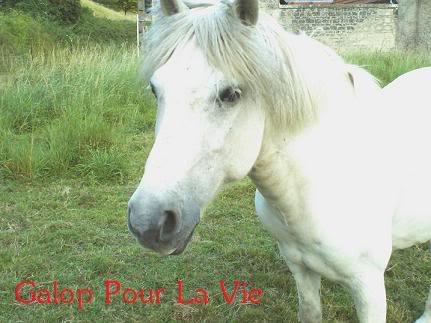 DIABOLO  - OI Poney - né en 1991 - adopté en novembre 2009 par Gaëlle Diabolo16