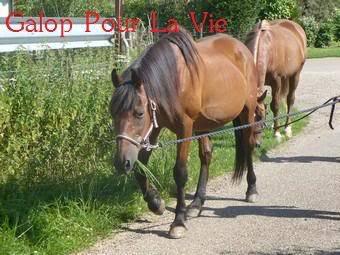 BIP BIP - ONC né en 1989 - adopté en septembre 2011 par malik70 - Page 3 116453bip_bip_en_promenade9