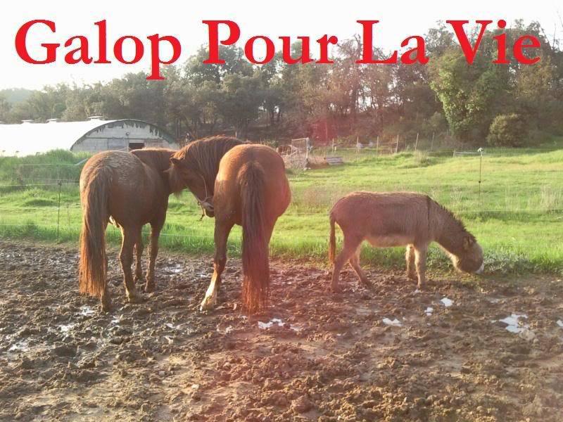 CUPIDON - ONC selle né en 1999 - adopté en juin 2011- hébergé à la Grange des Selles suite à abandon - Page 6 Cupidon6