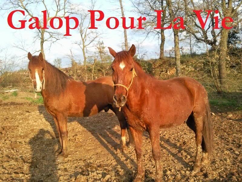 CUPIDON - ONC selle né en 1999 - adopté en juin 2011- hébergé à la Grange des Selles suite à abandon - Page 6 Cupidon7