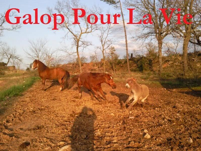 CUPIDON - ONC selle né en 1999 - adopté en juin 2011- hébergé à la Grange des Selles suite à abandon - Page 6 Cupidon8