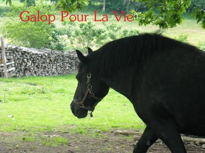 HANDY - Trait typée Breton née en 1995  (et sa fille TOSCANE née en 2010) - adoptée en juillet 2009 par Fannie Handy2
